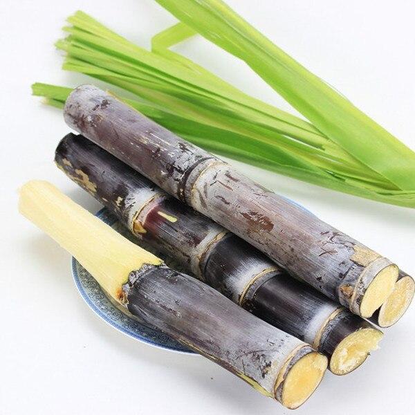 2016 On Sale ! 50 / bag Vietnam sugar cane seed succulent fruit tree seeds herb plant for home garden vegatable medicinal Seeds