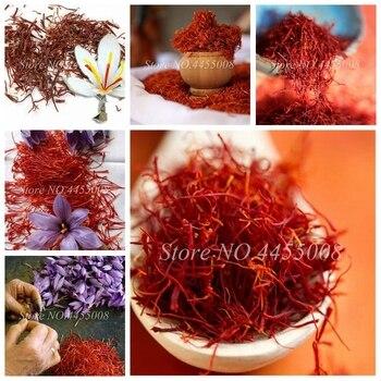 1000 Pcs/ Bag Imported Saffron Bonsai(Not Crocus Saffron Bulb) Outdoor Flower Iran Potted Plant