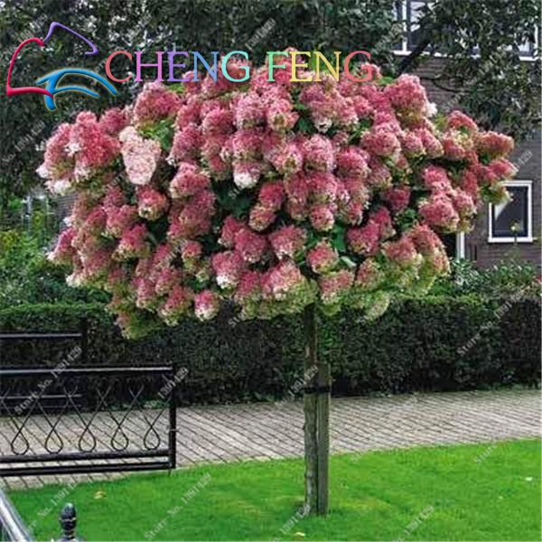 50 Pcs Hydrangea Flower Seeds Beautiful Bonsai Plant Or Tree In Pot ...