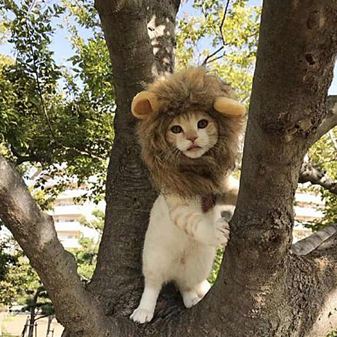 1 Stück Haustier Katze Hund Kleid Up Kostüm Perücke Emulation Löwe Haar Mähne Ohren Kopf Kappe Herbst Winter Muffler Schal Pet Produkte