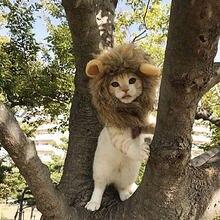e81bb9000 1Pc Pet Cat Dog Dress Up Costume Wig Emulation Lion Hair Mane Ears Head Cap  Autumn