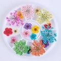 1 Caja De Mezcla de Flores Secas 3D Decoración Del Arte Del Clavo 1 Caja de BRICOLAJE Flor Preservada Decoración Para La Belleza de Uñas de Manicura