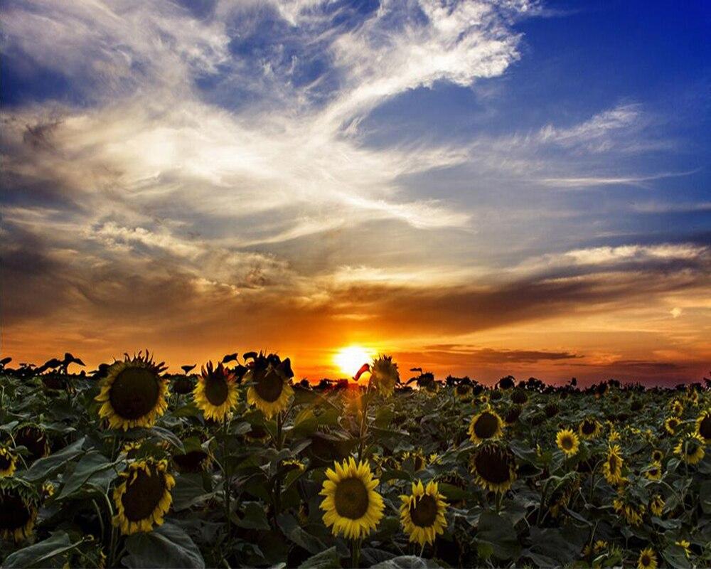 Wallpaper Kustom Hd Bunga Matahari Matahari Terbit Latar Belakang