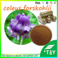 Best Quality Coleus Forskohlii Root Extract Forskolin Capsules 500mg*1000pcs
