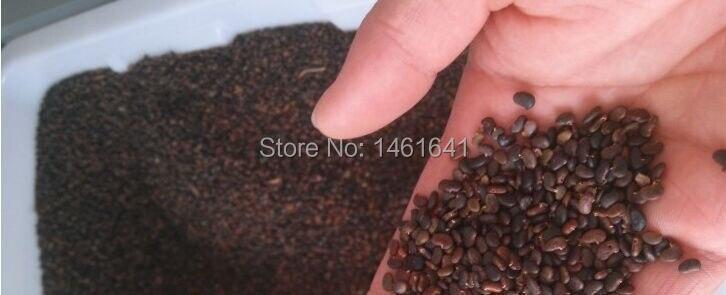 глицинии семена фото
