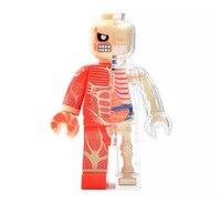 https://ae01.alicdn.com/kf/HTB1Vzx3e8Kw3KVjSZFOq6yrDVXaJ/4d-Skeleton-Bone-Puzzle.jpg