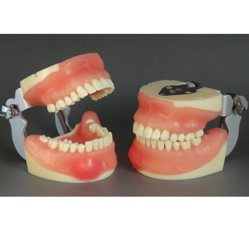 Teeth Model Dental Surgical Integrated Model For Oral Surgery Practice In Clinical Operations Medical Science Teaching Study пиала аликанте 10 5 см карт уп 1049311