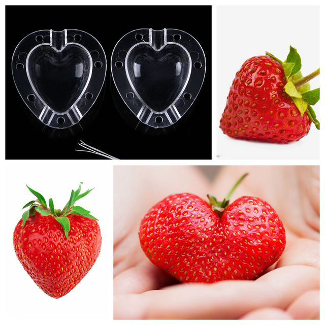 WCIC Cucumber Apple Strawberry Fruits Growth Forming Mold Star/Heart-shaped Plastic Transparent Growing Mould For Garden Bonsai