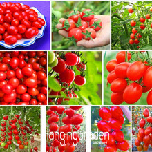 Loss Promotion!Cherry tomato seeds,red tomato cherry tomatoes,Original Package vegetables fruit seed,30 PCS/Pack,#FPJ95E