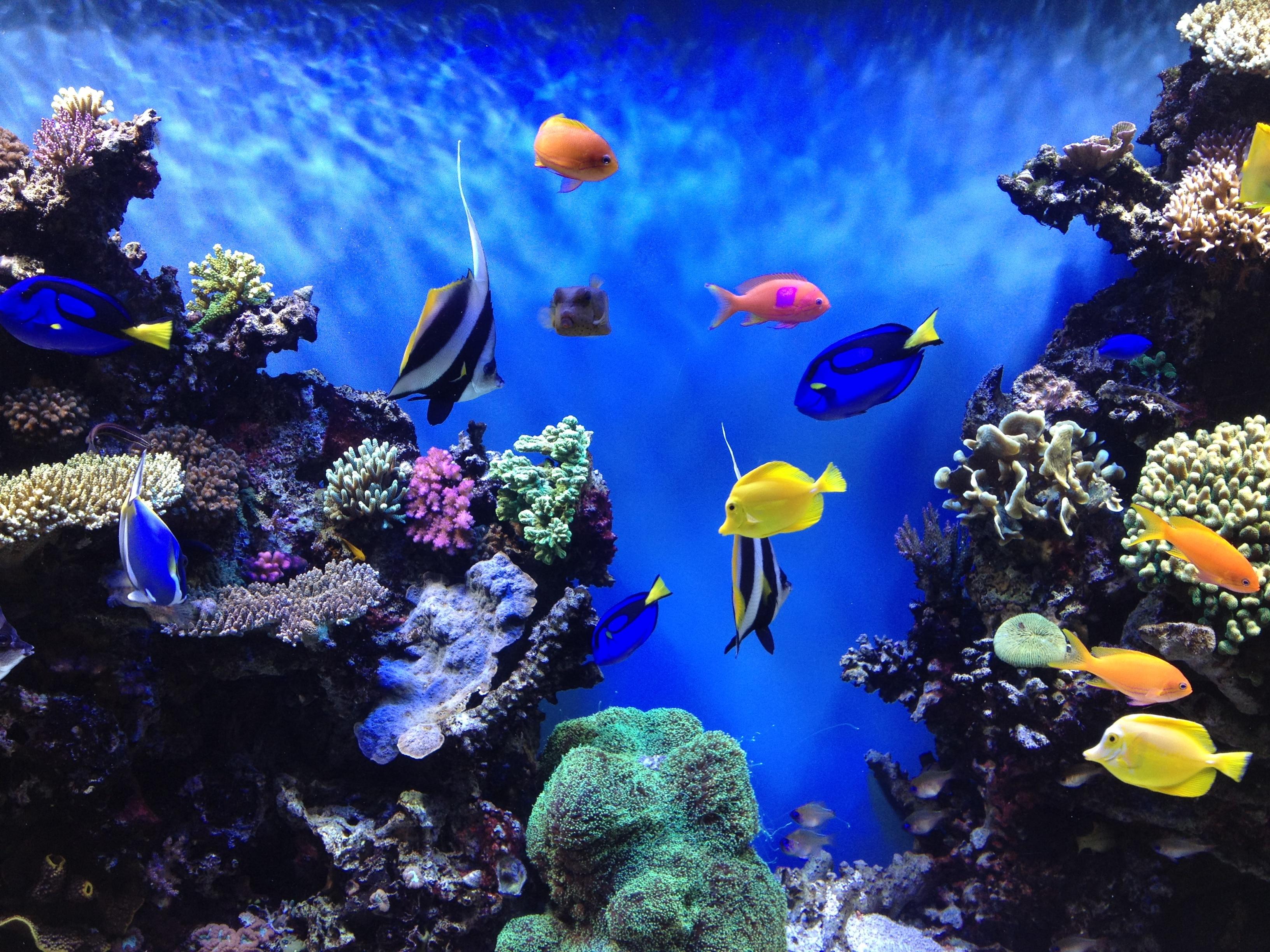 Waterproof Submersible Aquarium 18-48cm LED Light Fish Tank Bar Strip Light Lamp