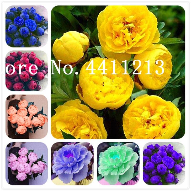100pcs Mini Satin Ribbon w//gold edge Flowers Bows Gift Craft Wedding Decor E344