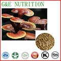 Nova Chegada de Reishi/ganoderma Lúcido/Lingzhi do cogumelo/Ganoderme luisant Cápsula 500 mg x 100 pcs