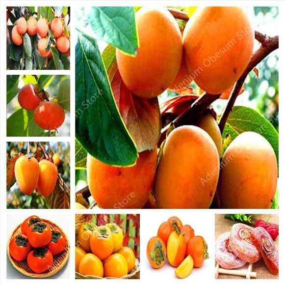 200 Pcs Persimmon Bonsai Exotic Bonsai Beautiful Delicious Diospyros Kaki Fruit Tree Home Garden Plant Fruit Bonsai Potted plant