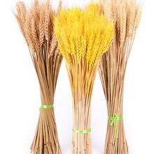 50 шт./лот настоящий пшеничный цветок уха натуральные сухоцветы для свадебной вечеринки украшения для самодельного изготовления скрапбукинга домашний декор пшеничный букет
