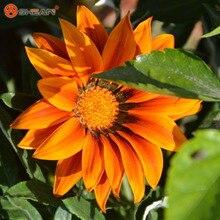New Arrivals 100pcs / bag Orange Chrysanthemum Gazania Seed Perennial Flowering Plants Potted Flowers Seeds DIY Home Garden