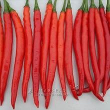 Marseed Non Hybrid 200 Red Pepper Vegetable Seeds Interesting Semi-Urban Garden