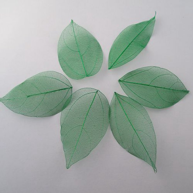 Wholesale 100pcs/Bag green colors Natural skeleton leaves for DIY and home decor Card making A2