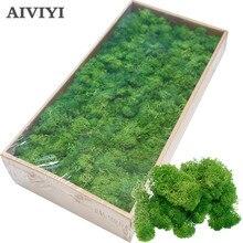 نبات أخضر اصطناعي عالي الجودة ، نبات خالد ، نبات طحلب ، عشب منزلي لغرفة المعيشة ، ديكور جدران ، زهور إصنعها بنفسك ، إكسسوارات صغيرة