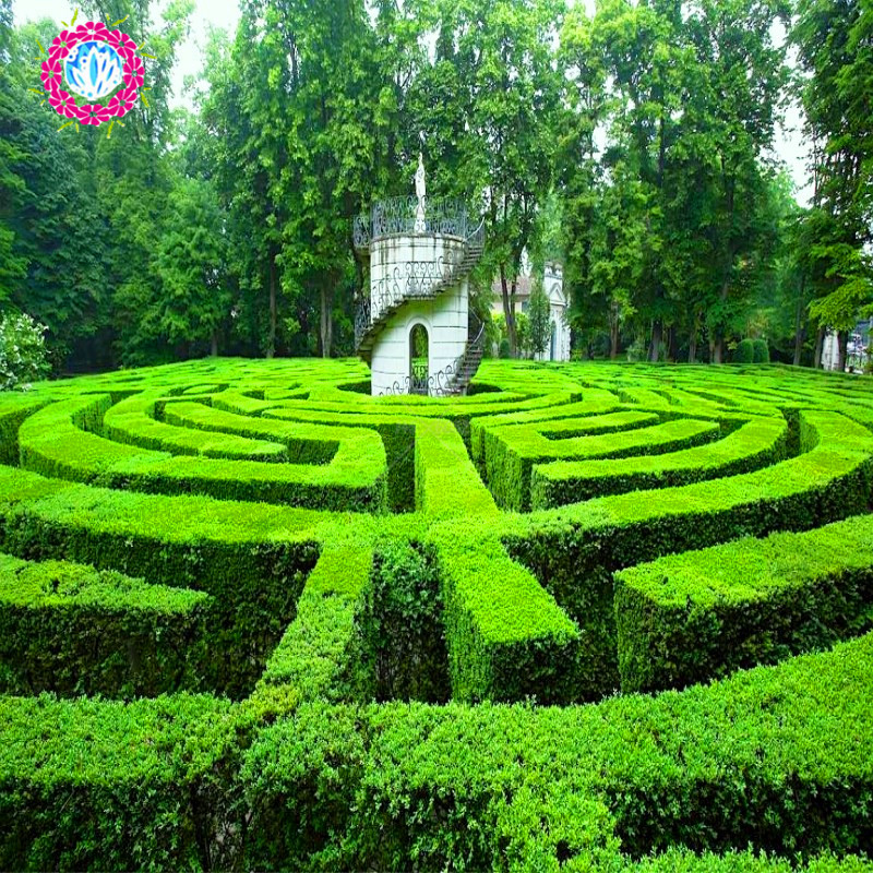 Hot 20pcs Boxwood pruning green landscape tree plant seeds.Tree wall seed for home garden &courtyard Free shopping