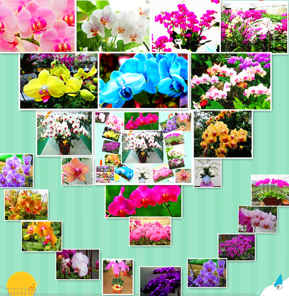 150 Pcs Orchid Seeds 30 Kind Different Penghu