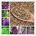 100 Unids Indio semillas de Cáñamo, Multi Flor Color de Semillas, Jardín de Plantación de Semillas