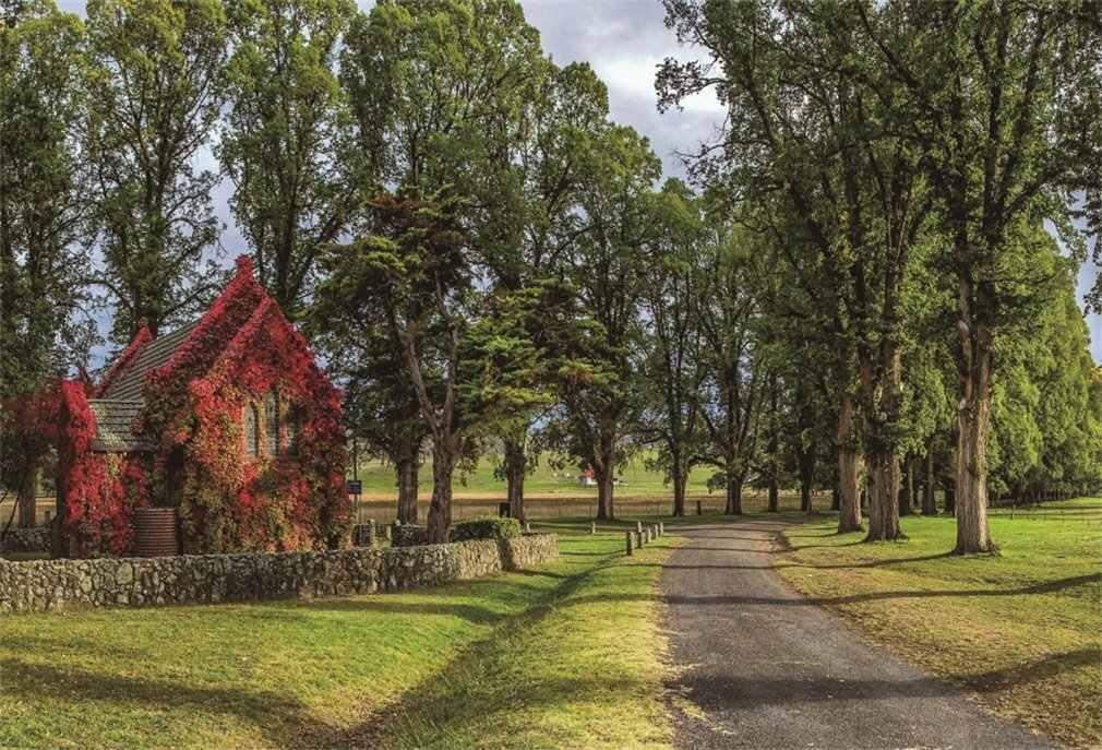 التصوير خلفية Ric الأشجار العشب الحقل رث شيك منزل النباتات كرمة أشعة الشمس الأزرق السماء سحابة بيضاء الطريق الطبيعة فتاة