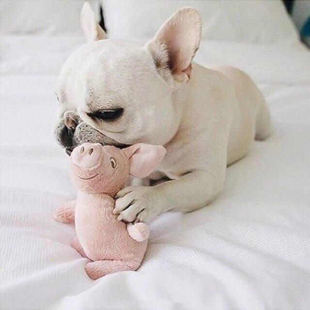 Shio Anjing dan Babi