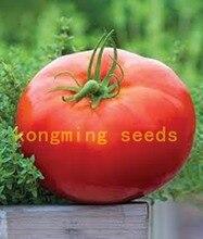 цена на 100 pcs/bag bonsai Red Giant Competition Heirloom Tyazeloves Tomato  vegetable for garden