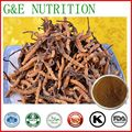 factory supplier Yarsagumba Extract/Cordyceps Extract 200g/lot