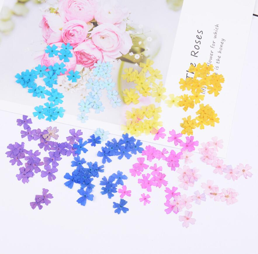 120pcs 10mm Pressed Dried Flower Cherry blossoms Filler For Epoxy Resin Jewelry Making Postcard Frame Phone Case Craft DIY