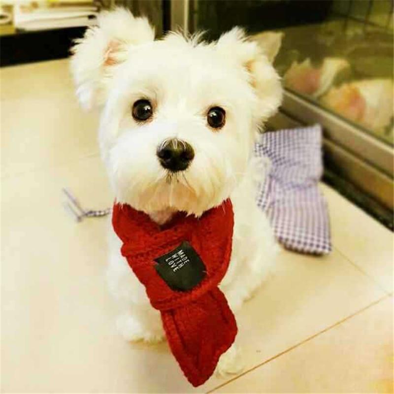 Kutya ruházati kiegészítők Állítható kisállat kutya macska - Pet termékek - Fénykép 1