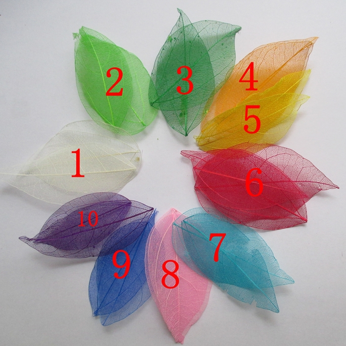 800pcs Multicolor optional Natural skeleton leaves for DIY Scrapbook wedding accessories 3 7cm 014005014