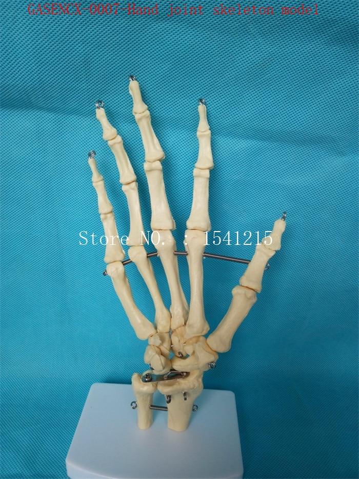 Hand joint skeleton model Human bone Skeleton skeleton model Teaching model Medical mold-GASENCX-0007 animal skeleton anatomy model veterinary medical teaching aids pet dog anatomical large dog skull model gasencx 0074
