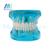 Manka Cuidado de Restauración con Implante Modelo Modelo de Los Dientes Dientes Oral