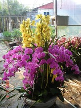 100 Pcs Orchid Seeds, 30 Kind Different Multicolor Potted Butterfly Orchid Flower Seeds , Garden Supplies, Bonsai, home