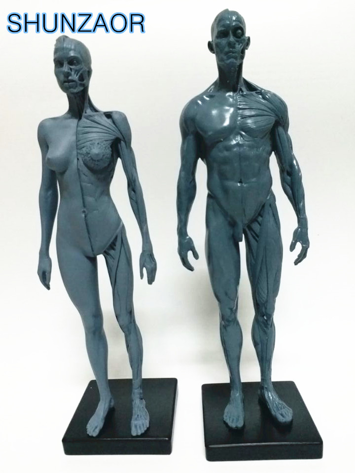 compare prices on human skeleton model for sale- online shopping, Skeleton