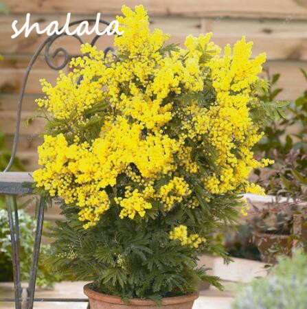 online buy wholesale exotic yellow flowers from china exotic, Beautiful flower