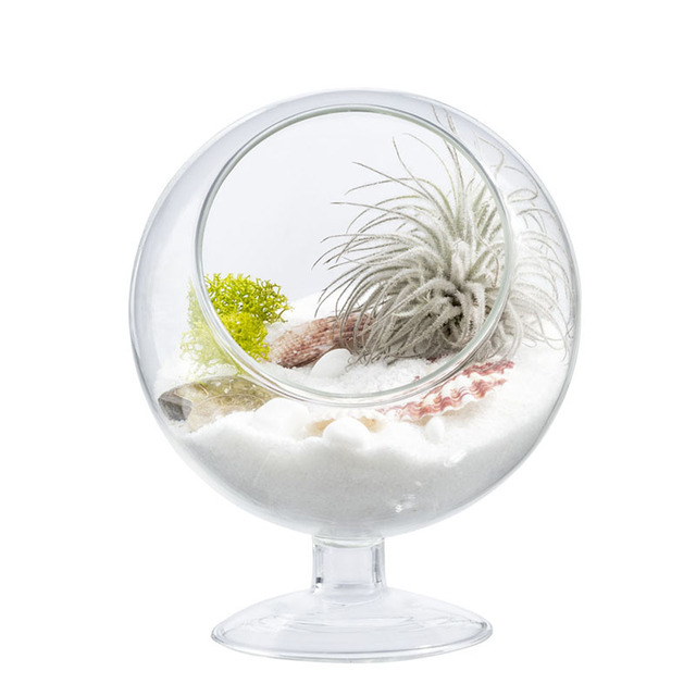 Mkono Clear Glass Vase Air Plant Terrarium Airplants Succulent Plant Planter Garden Indoor Micro Landscape Greenhouse, Footed