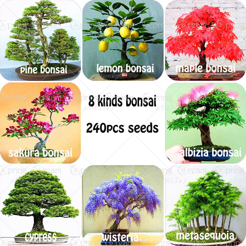 240pcs/bag Premium Bonsai Package 8 kinds of Bonsai Tree Seeds Pine Maple Bonsai Seeds DIY Home Garden Combined Green Plants