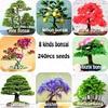 240pcs/bag Premium Bonsai Package 8 kinds of Bonsai Tree Seeds Pine Maple Bonsai Seeds DIY Home Garden Combined Green Plants