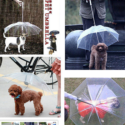 Transparent and Portable Pet Umbrella with Built-in Leash
