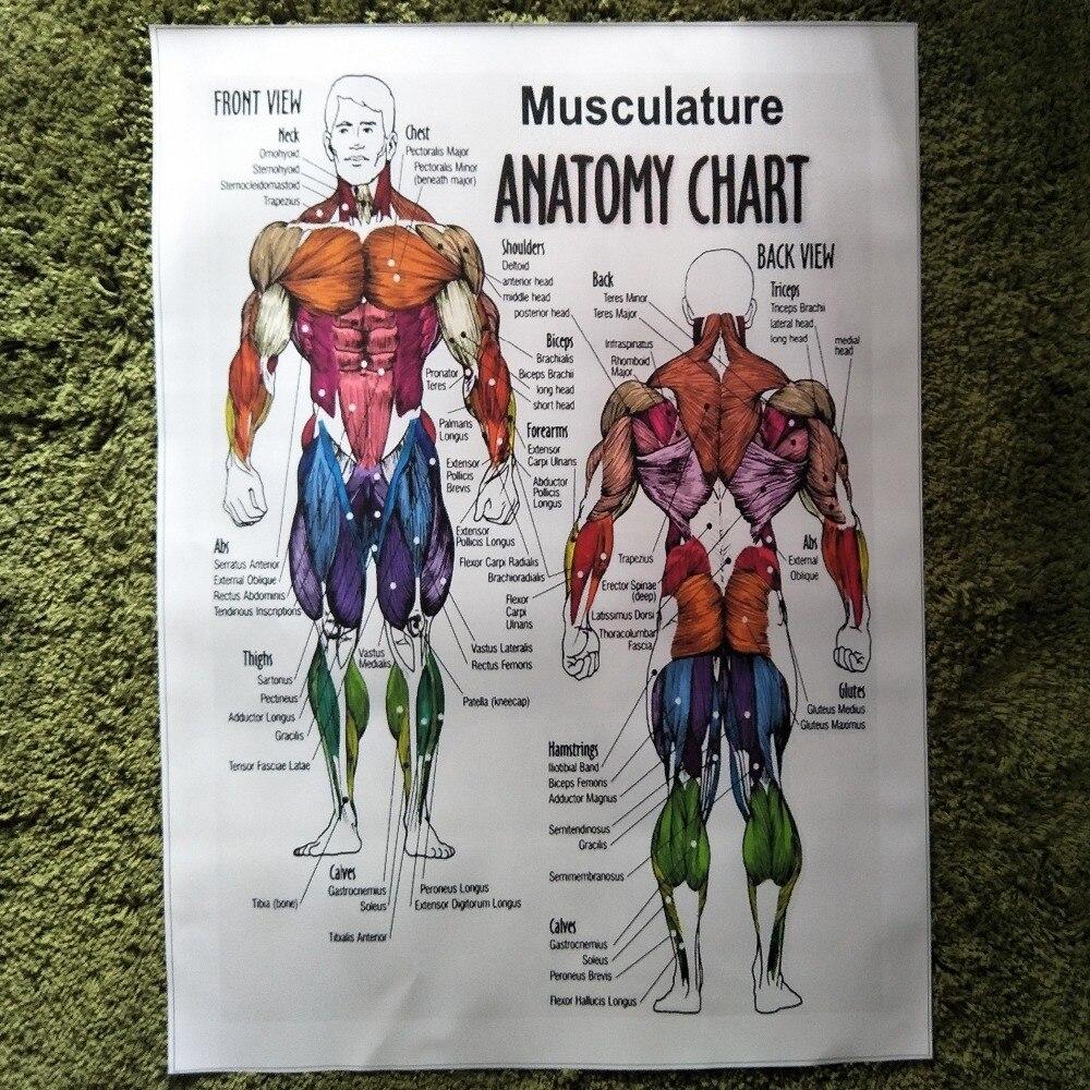 ZZ1855 menschlichen muskulatur anatomie poster drucken Bild Leinwand ...
