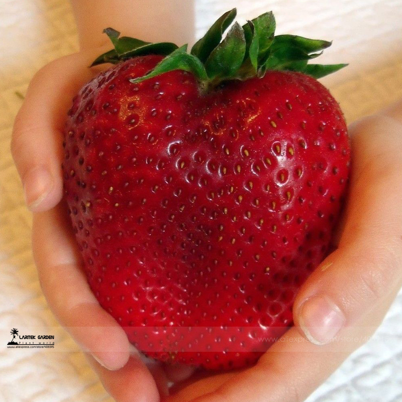 Rarest Heirloom Super Giant Japan Red Strawberry Organic Seeds Professional Pack 100 Seeds Pack Sweet Juicy