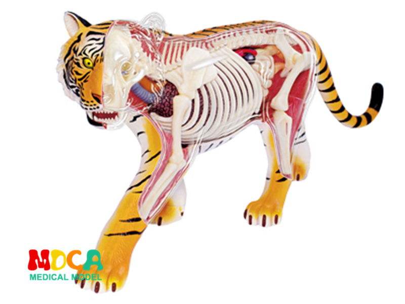 Tiger 4d master puzzle Assembling toy Animal Biology organ anatomical model medical teaching model robin hood 4d xxray master mighty jaxx jason freeny anatomy cartoon ornament