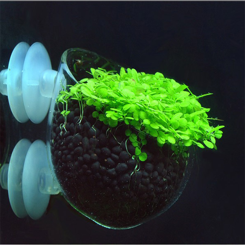 Crystal Plant Glass Pot voor Aquarium Tank Aquascape Aquarium Aquarium voor het fokken van gras en landscaping Red Shrimp Holder