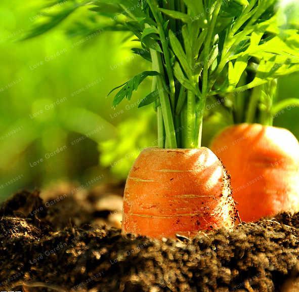 100 Pcs Wortel Lezat Bonsai Orange Lobak Bonsai Sayuran Tanaman Taman Menurunkan Berat Badan Sehat Buah dan Sayur Food Bonsai