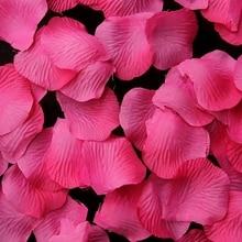 APRICOT Rose Petals