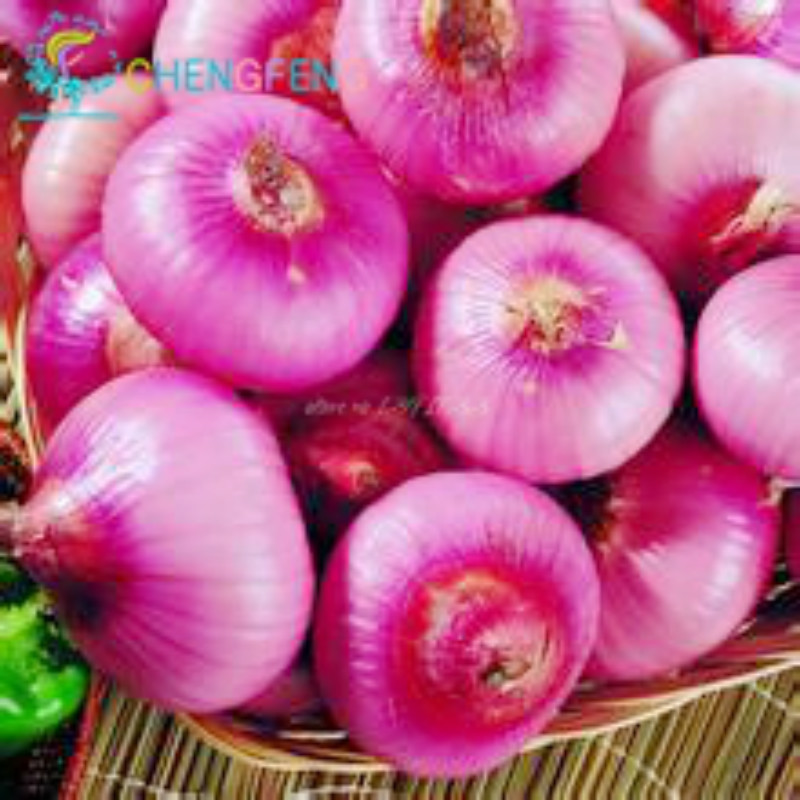 top 10 most popular the fresh onion ideas and get free shipping