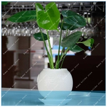 Buy indoor plants monstera and get free shipping on AliExpress com