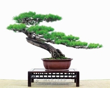 Balcony Patio Bonsai Fruit Flower Trees Planted Seeds DIY Your garden and home